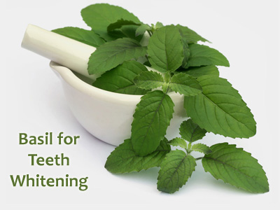Basil for Teeth Whitening